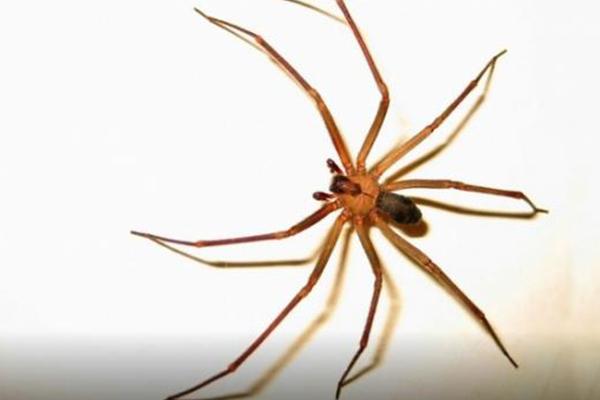 Picadas de animais venenosos podem causar perda das funções dos rins